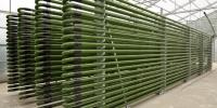 Alga Energy S.p.A. - Lucca; Colture algali per la produzione di olio combustibile